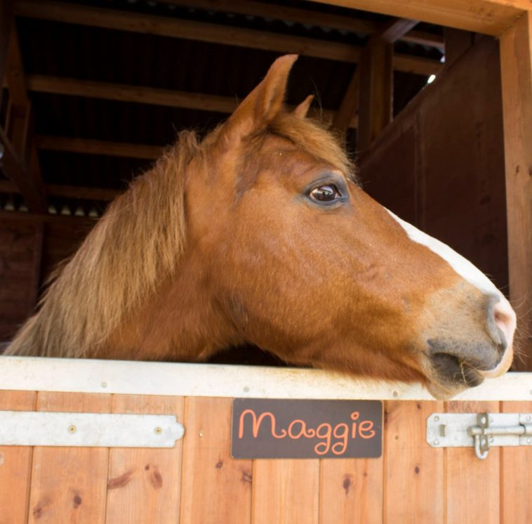 Maggie horses and ponies at Parkers Equestrian Riding School Cockermouth