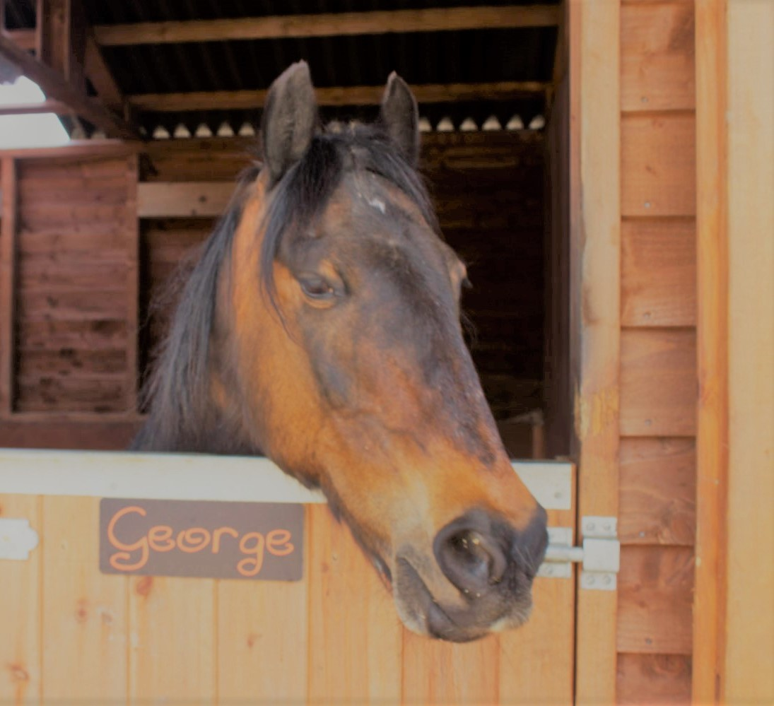 George at Parkers Equestrian Riding School