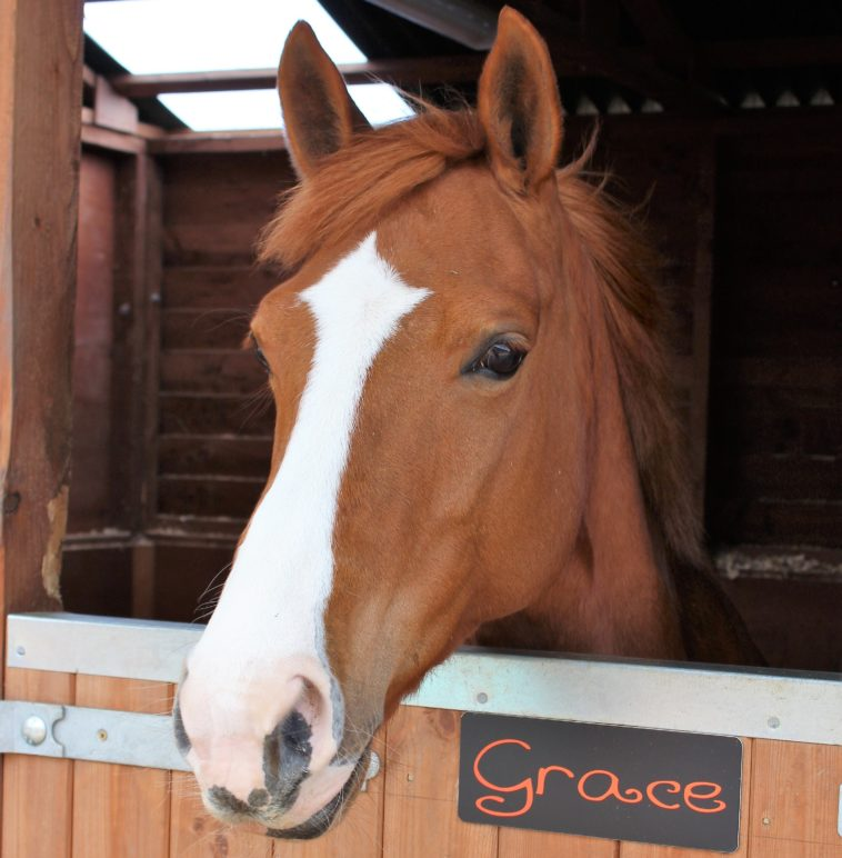 Grace at Parkers Equestrian Riding School Cumbria