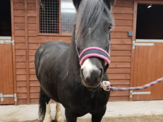 Cockermouth Riding School Parkers Equestrian